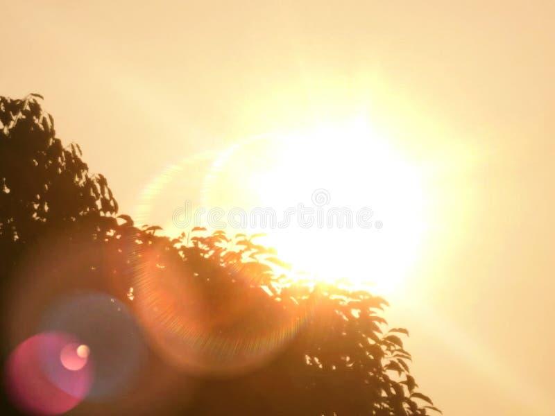 Een boom die zon en zon behandelen plaatst stock afbeeldingen