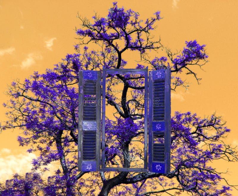 Een boom en een venster, stock fotografie