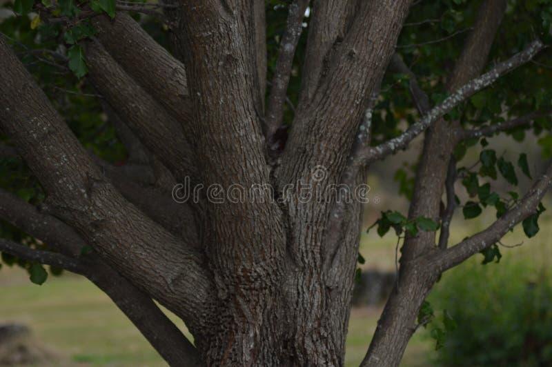 Een boom en elk van het ` s vertakt zich stock afbeeldingen