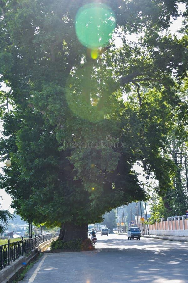 Een boom in het midden van een kleine town& x27; s de weg met ochtend glanst bij de vallei India van Srinagar Kashmir stock foto's