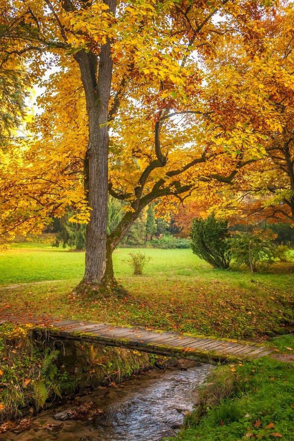 Een boom met bladeren in de herfstkleuren royalty-vrije stock foto's