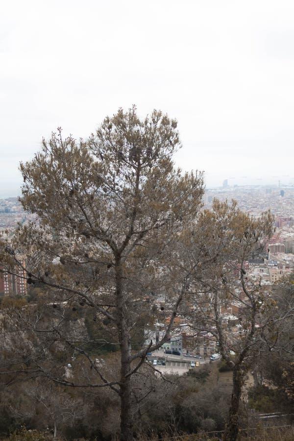 Een boom in een middel van de mening stock foto's