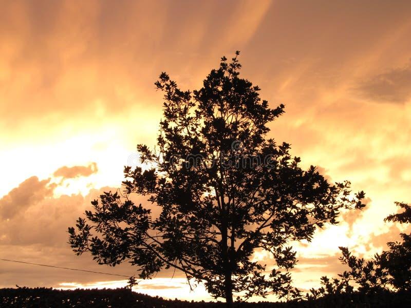 Een boom onder de sombere hemel en een zonsondergang stock afbeeldingen