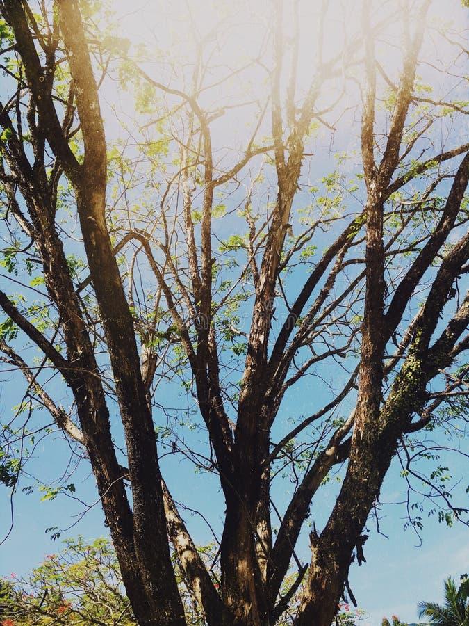 Een boom onder de zon stock afbeelding