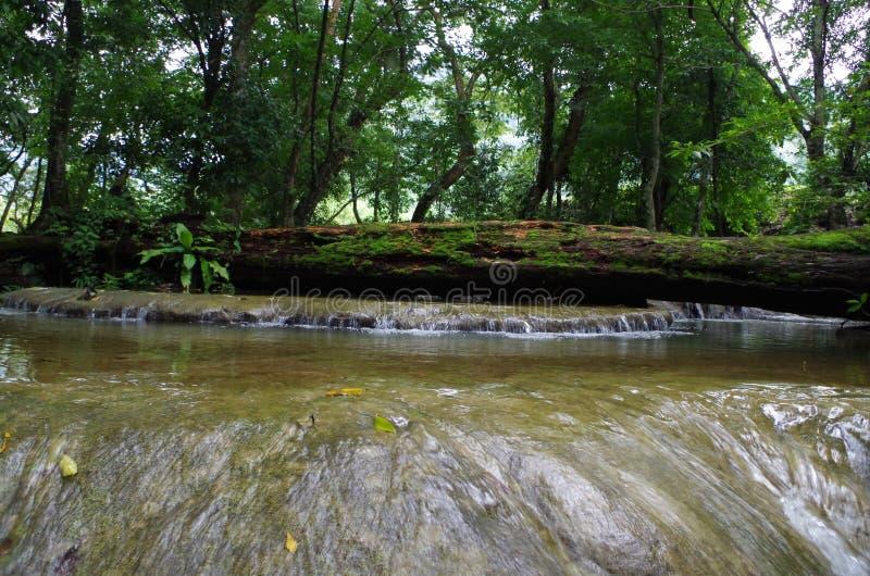 Een boom op de rivierweg royalty-vrije stock afbeeldingen