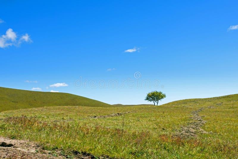Een boom op de weiden stock afbeelding