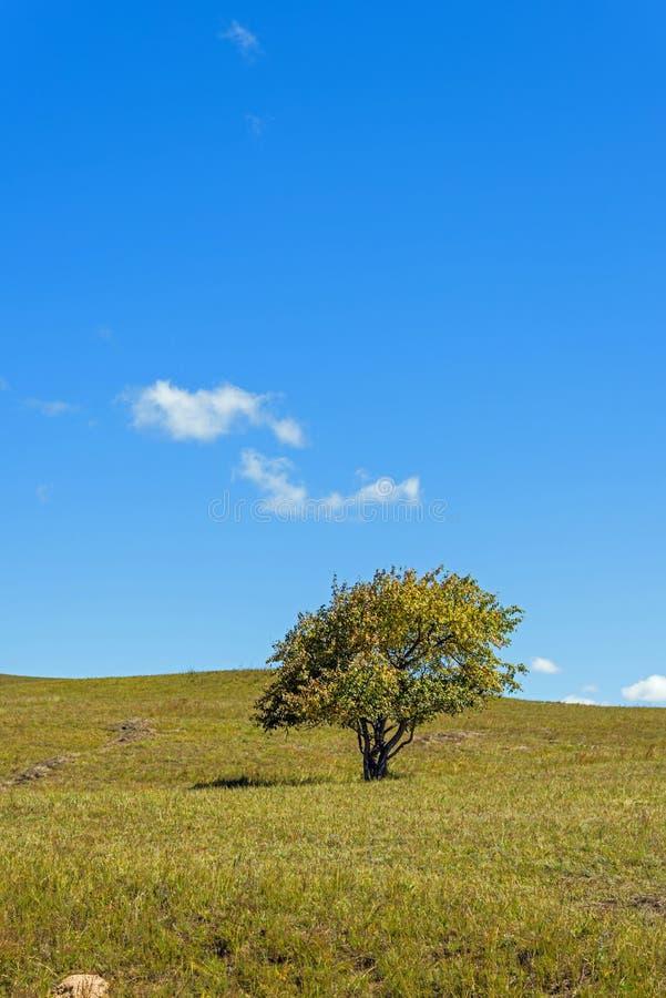 Een boom op de weiden stock foto's