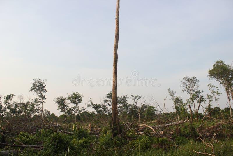 Een boom is veilig van registreren royalty-vrije stock afbeelding