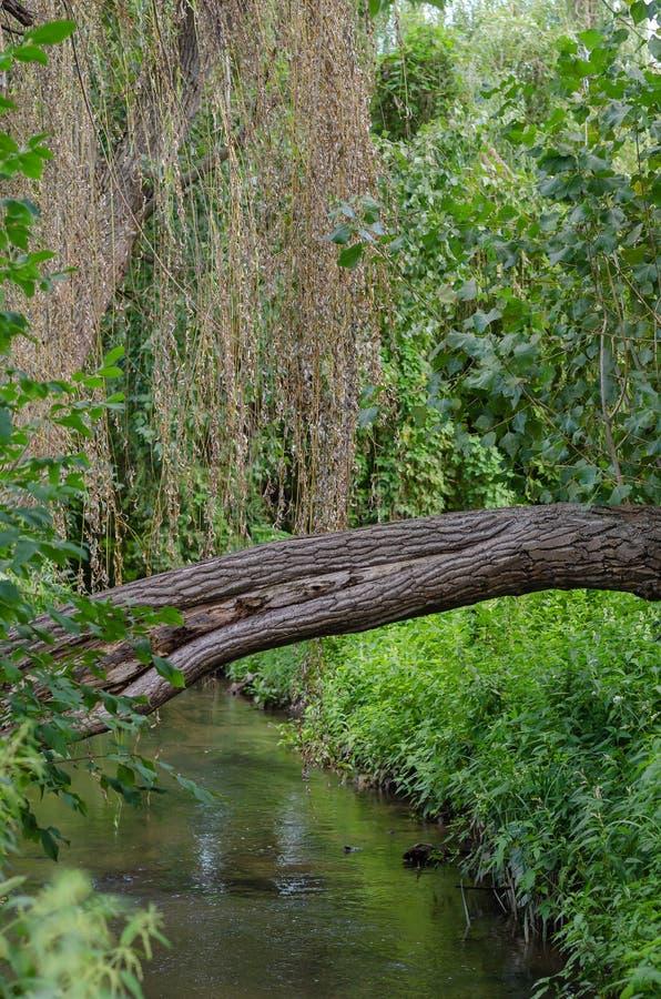 Een boom viel over een kleine bosrivier Verticale regeling stock foto's