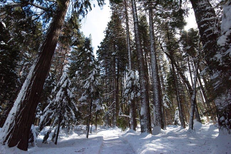 Een boom voerde weg hoewel het bos stock afbeeldingen