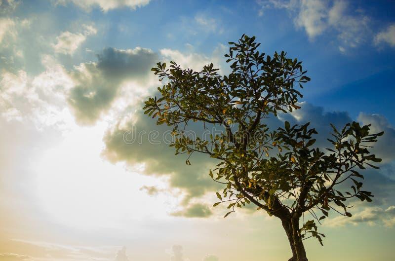 Een boom in zonsondergang royalty-vrije stock afbeelding