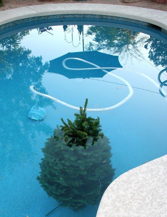 Een Boom Zwemt In Arizona Gratis Openbaar Domein Cc0 Beeld