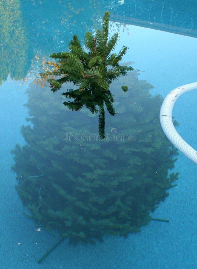 Een Boom zwemt in Arizona royalty-vrije stock afbeelding