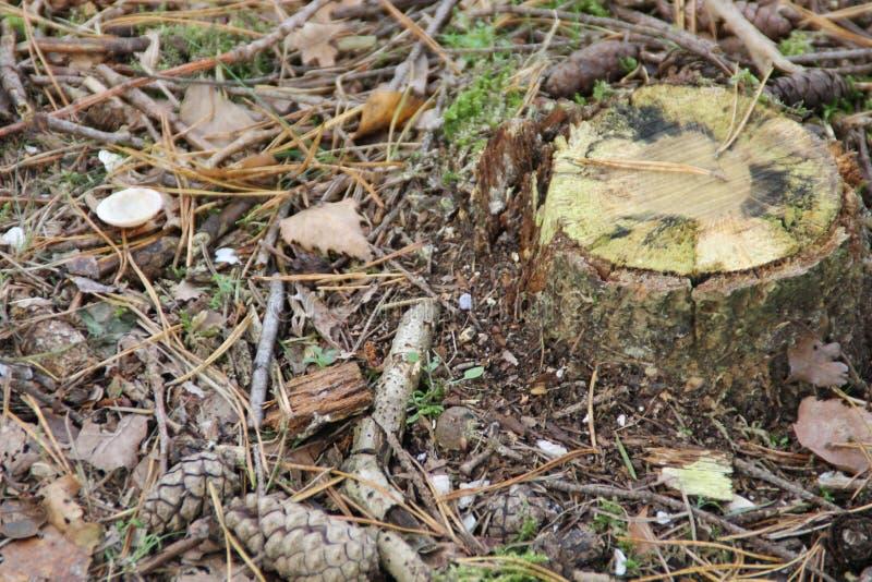 Een boomboomstam in grond het omringen door bladerenachtergrond stock foto's