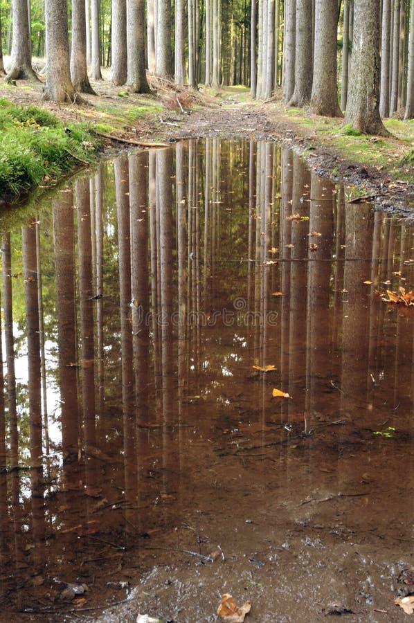 In een bos in de herfst royalty-vrije stock afbeeldingen