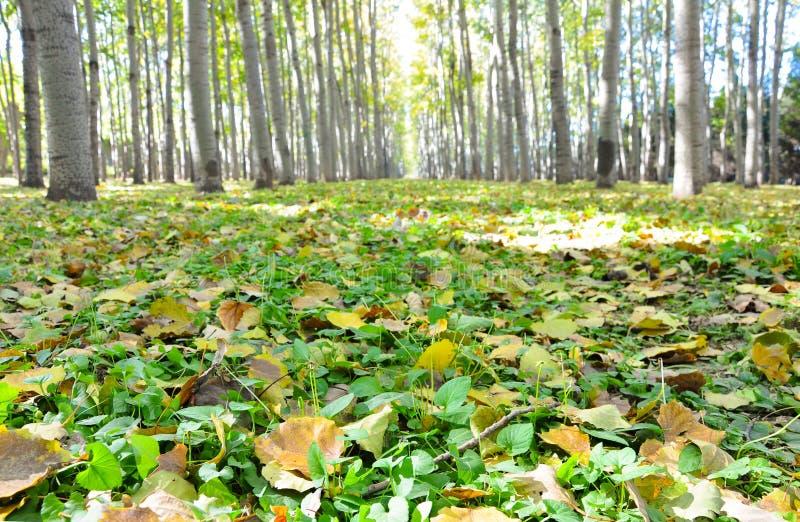 Een bos gevoerde die weg door gevallen bladeren in de herfst wordt behandeld royalty-vrije stock foto