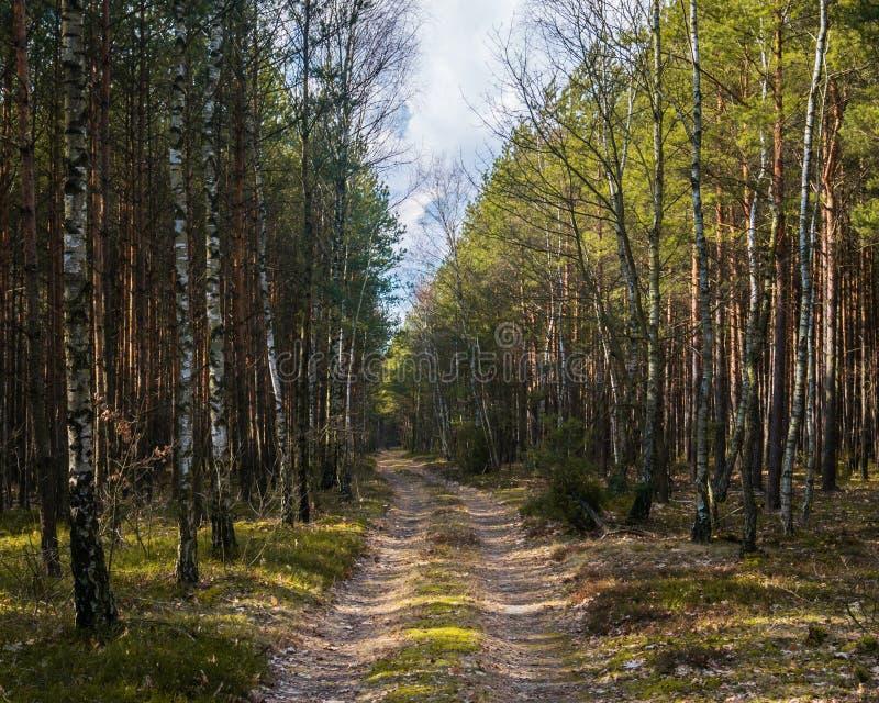 Een bos in het platteland in Europa stock afbeelding