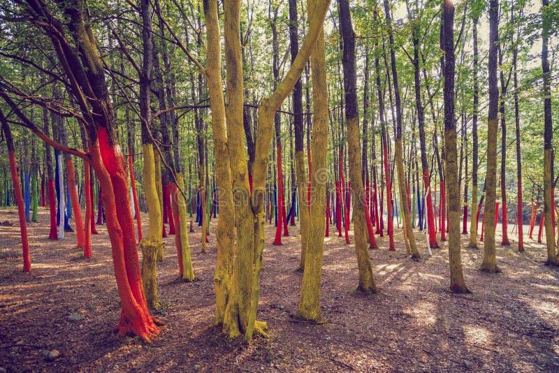 Een bos met bomen in verschillende kleuren worden geschilderd die royalty-vrije stock afbeeldingen