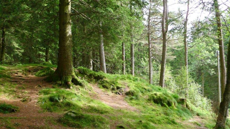 Een bos in Noorwegen royalty-vrije stock foto's