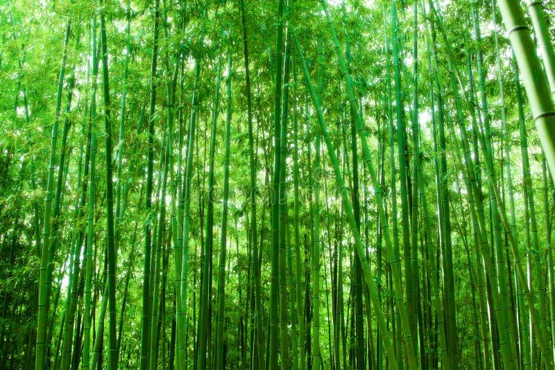 Een bos van bamboe stock fotografie