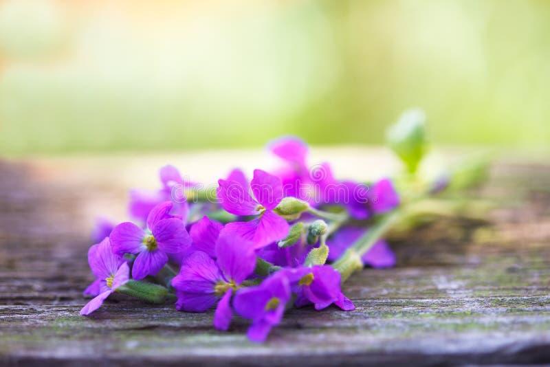 Een bos van blauwe viooltjes stock foto