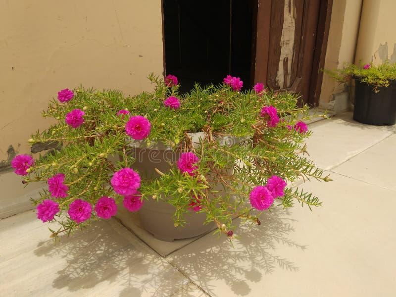 Een bos van bloemen in een pot stock foto's