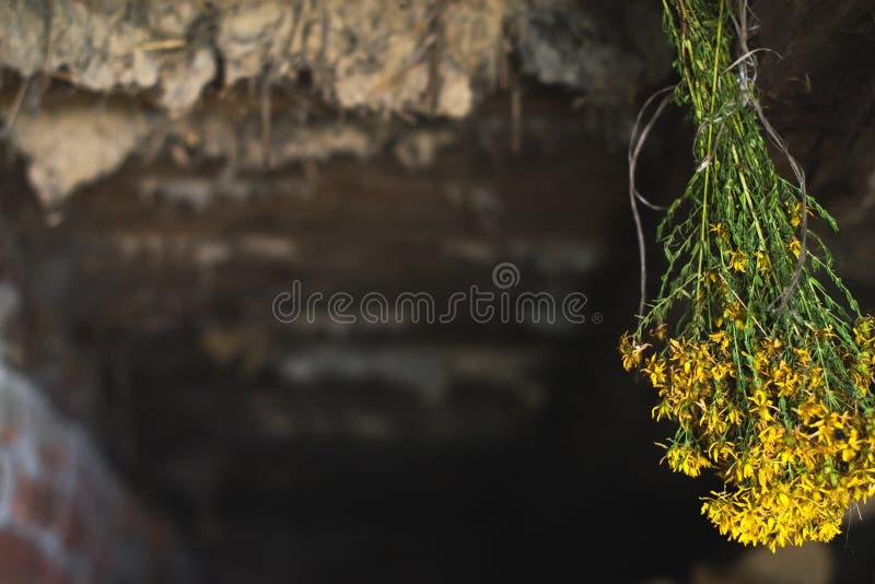 Een bos van droge bloemen in de oude zolder stock foto