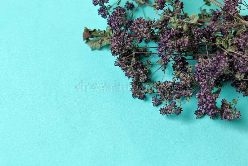 Een bos van droog gras Thymetuin Tegen de achtergrond van muntkleur stock afbeelding