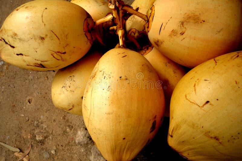 Een Bos van Gele Koning Coconuts Closeup royalty-vrije stock afbeelding