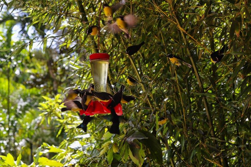 Een bos van kolibries royalty-vrije stock afbeelding