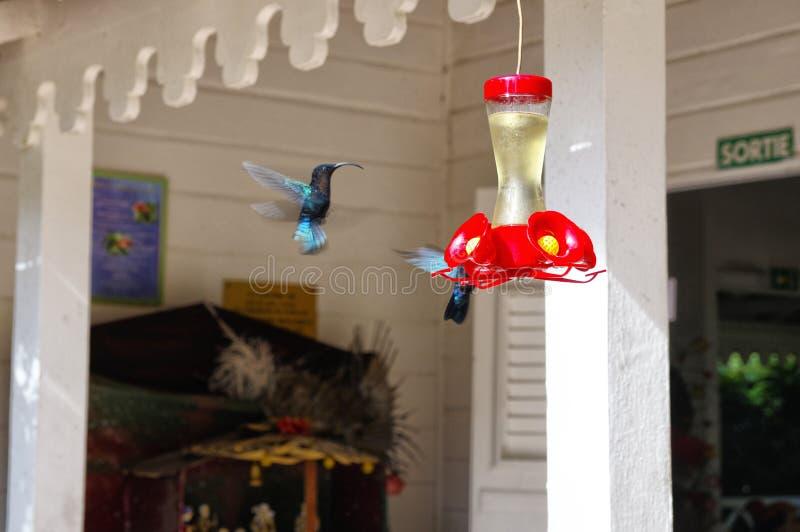 Een bos van kolibries stock afbeeldingen