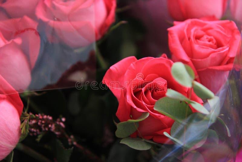 Een bos van roze rozen royalty-vrije stock foto
