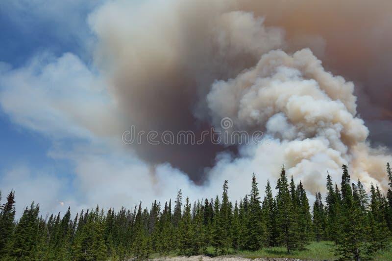 Een bosbrand in een nationaal park stock afbeeldingen