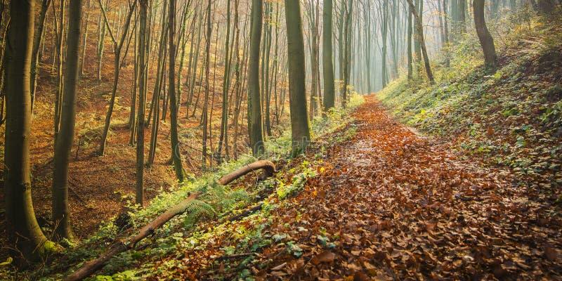 Een bosdiesleep met de herfst wordt behandeld gaat weg royalty-vrije stock foto