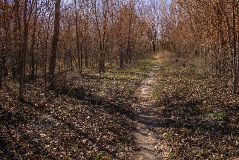 Een bosweg stock afbeelding