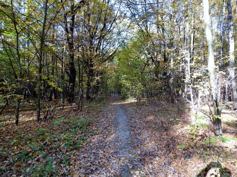 Een bosweg wordt behandeld door een droog gebladerte royalty-vrije stock afbeeldingen