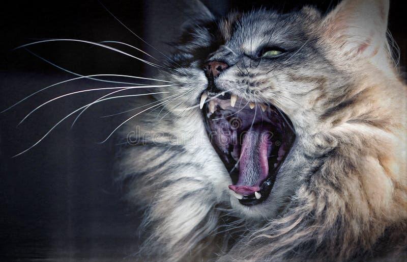 Een boze kat? stock afbeelding