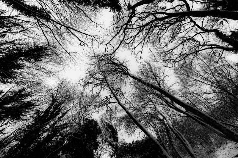 Een brede hoekmening van bomen van onderaan, met takken die tot texturen leiden royalty-vrije stock afbeelding