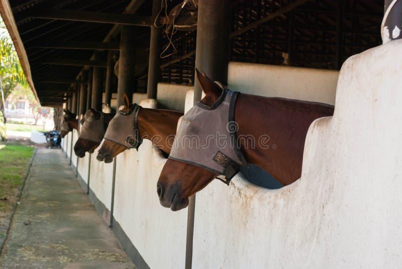 Een bruin paard bij stal stock fotografie