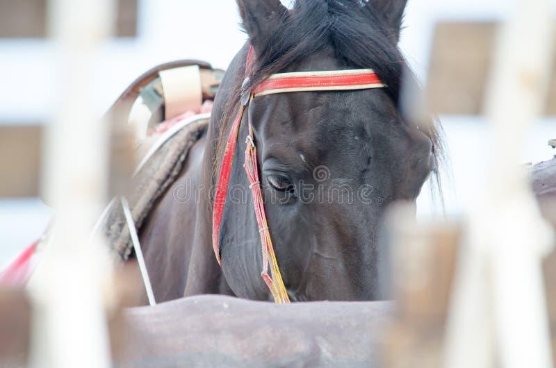 Een bruin paard heeft zo slaperig royalty-vrije stock fotografie