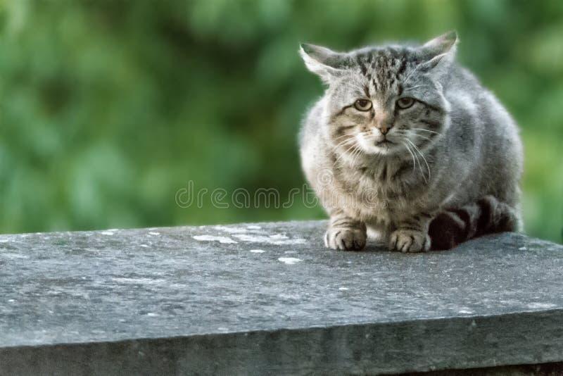 Een bruine en witte kattenzitting op een richel stock fotografie