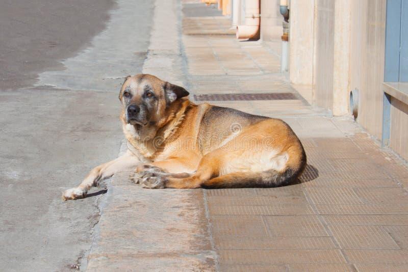 Een bruine hond die op de stoep rusten royalty-vrije stock fotografie