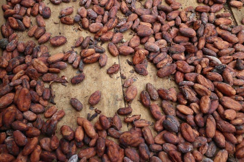 Een cacaozaad in doos in voorbereiding om chocolade te maken royalty-vrije stock afbeelding
