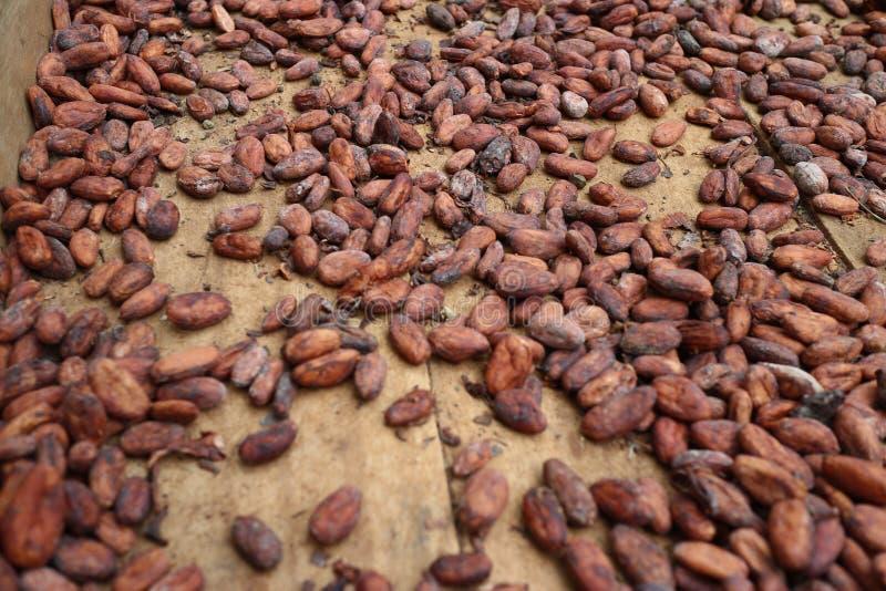 Een cacaozaad in doos in voorbereiding om chocolade te maken royalty-vrije stock afbeeldingen