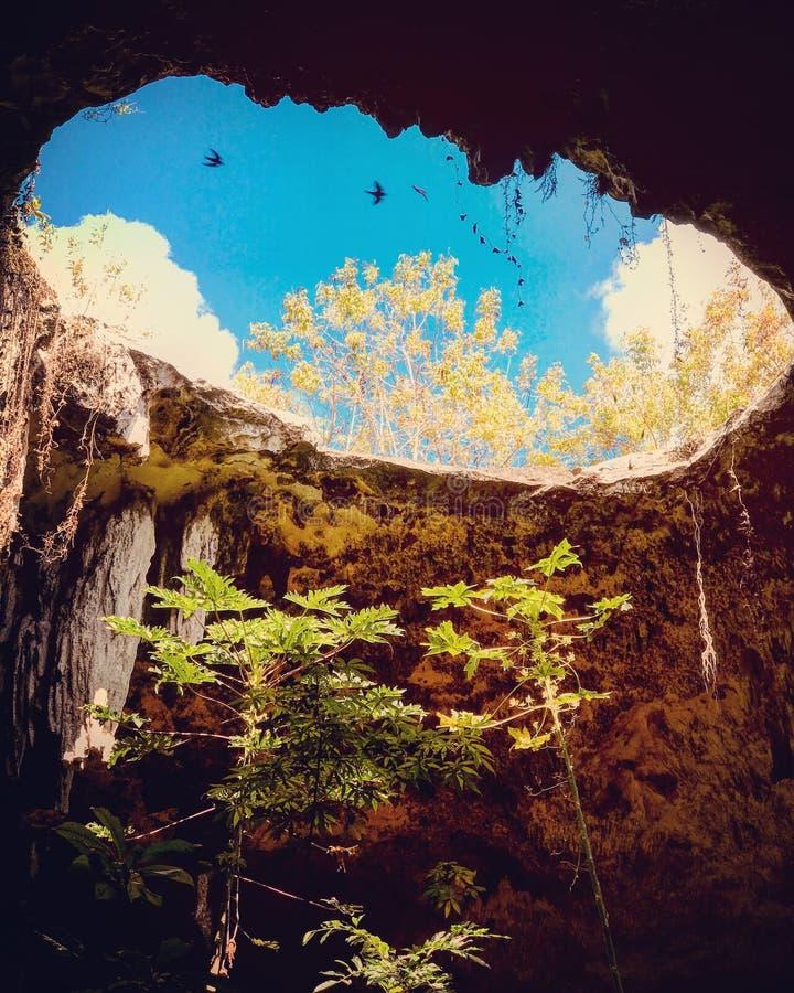 Een cenote in het Schiereiland van Yucatan - MEXCIO - CENOTE stock fotografie