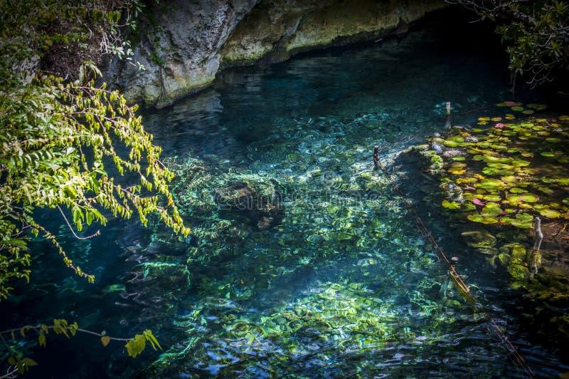 Een cenote in Mexico royalty-vrije stock afbeeldingen