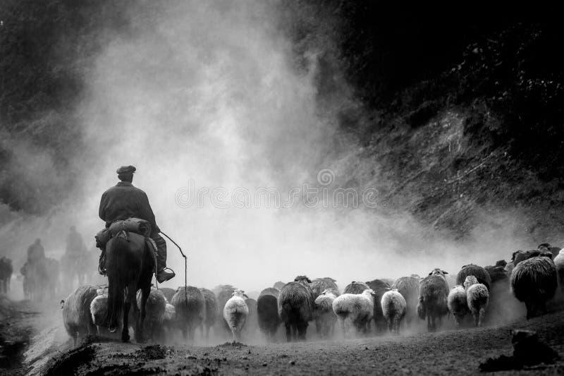 Een Chinese veehoeder en zijn schapen op de doorgangsweg in Xinjiang royalty-vrije stock fotografie
