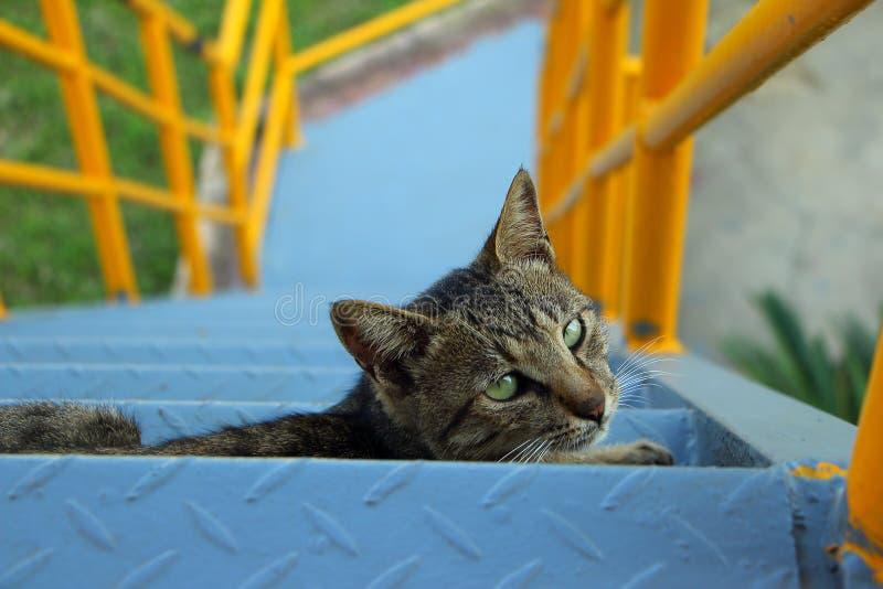 "Een close-up cat/ç ‰ ¹ å † ™çš ""çŒ ""/eyesight/çœ ¼ 神 royalty-vrije stock fotografie"