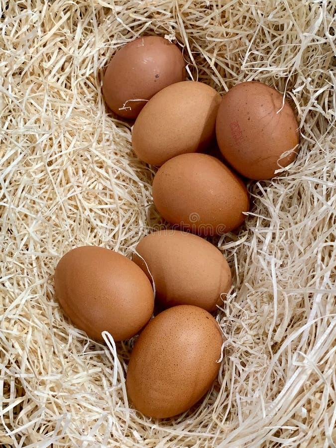 Een close-up van de eieren van de verse kip over het hey nest royalty-vrije stock afbeeldingen