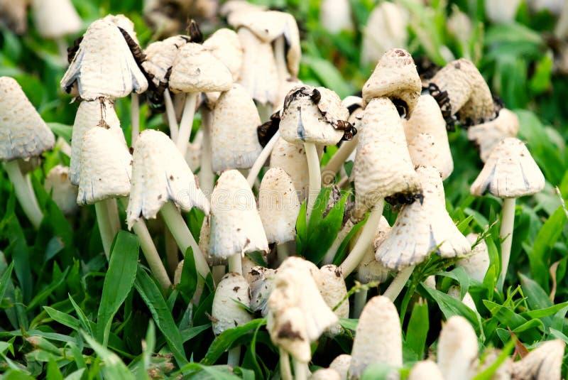 Een close-up van een groep paddestoelen stock afbeeldingen